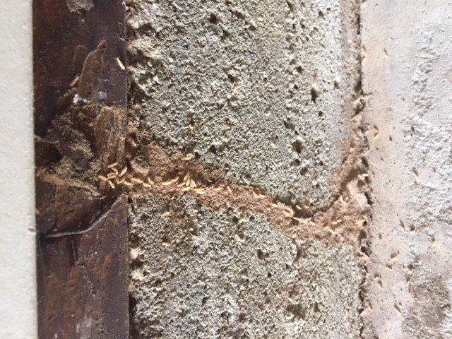 termite inspection companies