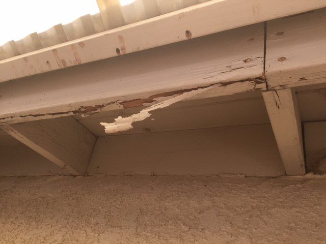 termite treatment companies