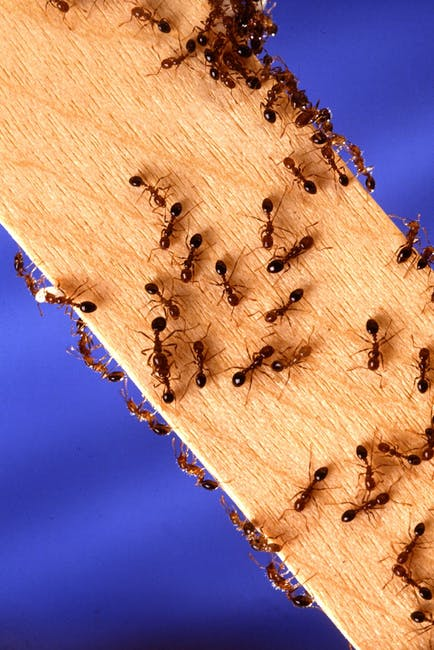 ant removal Burbank